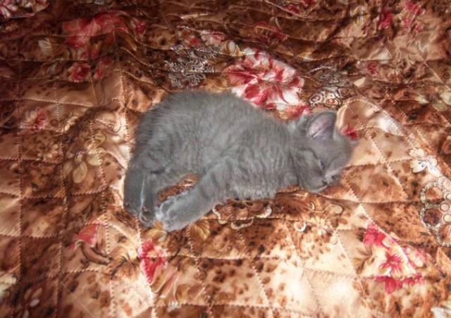Просто история надежды и спасения Длиннопост, Кот, Спасение
