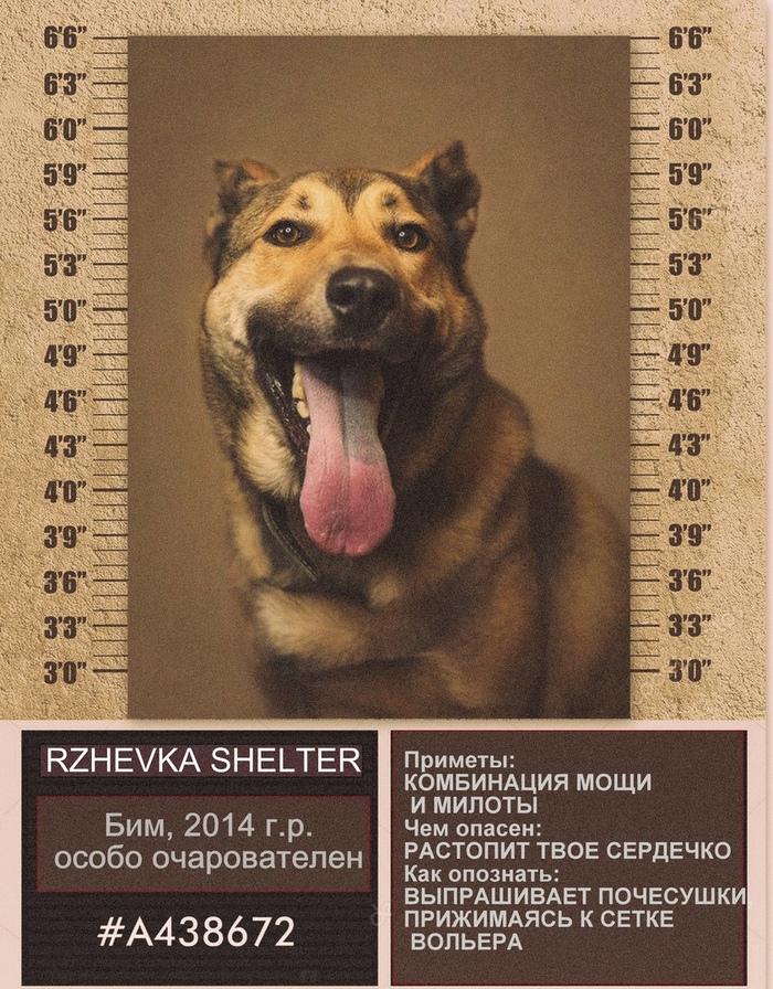 """Разыскиваются любящие хозяева! Может быть они тебя ждут? (приют """"Ржевка"""", СПб) Собака, Приют для животных, Ищу хозяина, В добрые руки, Ржевка, Санкт-Петербург, Длиннопост, Без рейтинга"""
