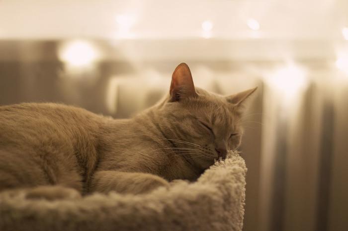 Вечерняя фотосессия кота Кот, Фотосессия, Длиннопост