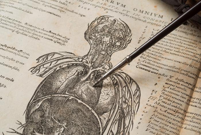 Человек, объяснивший, как на самом деле работает сердце История науки, Медицина, Анатомия, Средневековье, Копипаста, Длиннопост