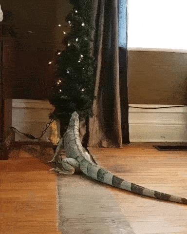 Не только коты любят елки...