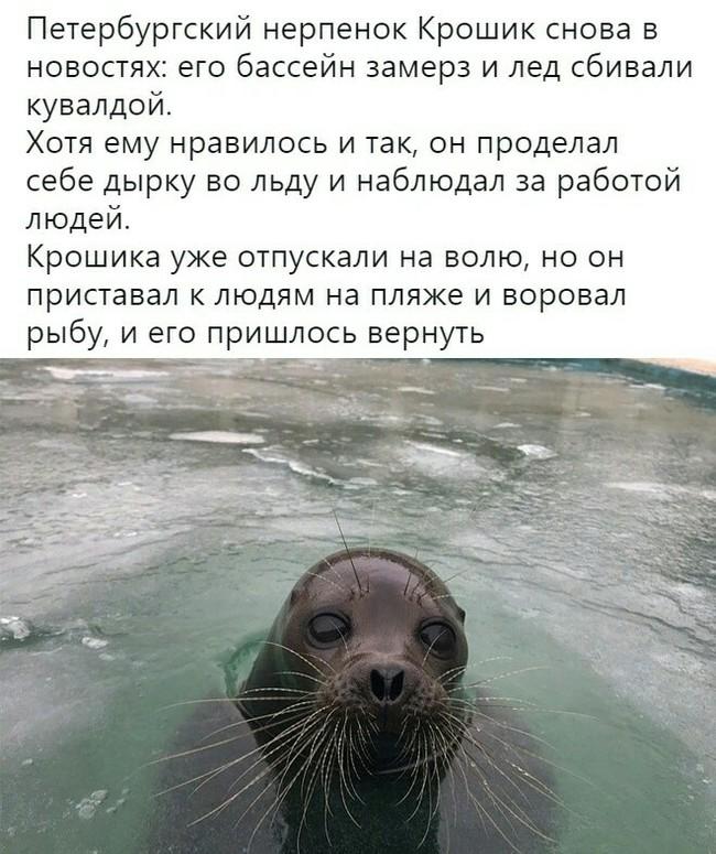 Hастроение по жизни: Kpoшик
