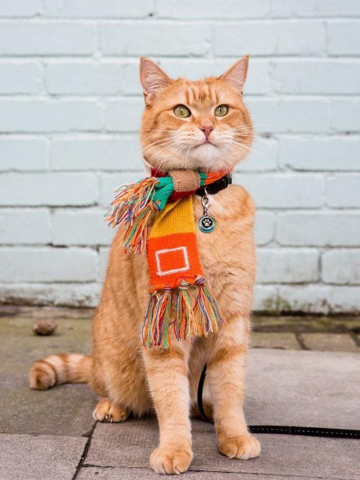 повседневной фото кота боба игрушки его помощью придают