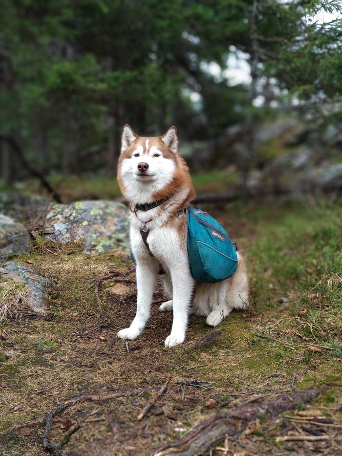 Лучший друг походника Поход, Горы, Таганай, Урал, Природа, Собака, Друг человека, Длиннопост, Сибирский хаски
