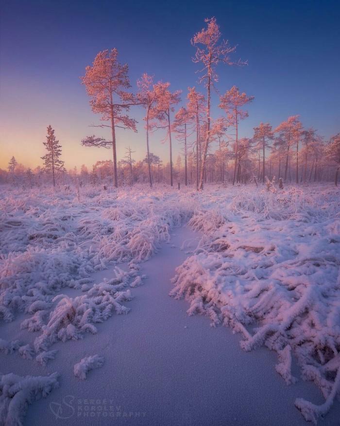 Замороженное болото под сахарной пудрой, Кольский полуостров. Сергей Королёв