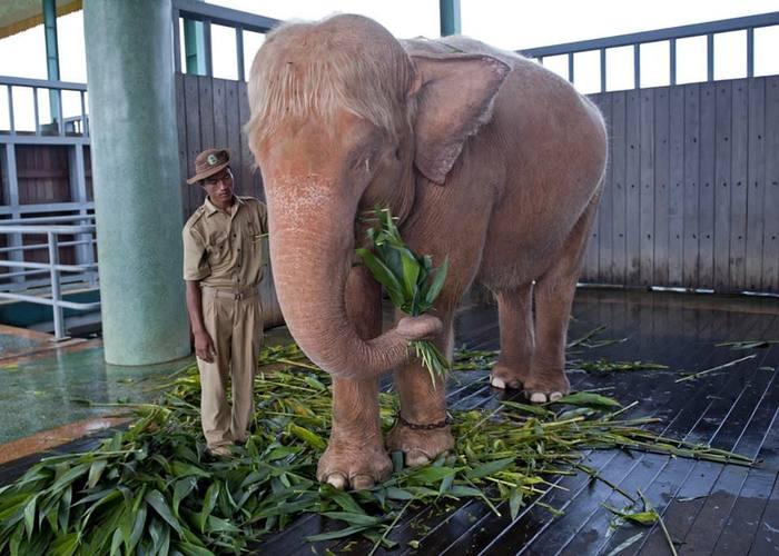 Редкий слон альбинос