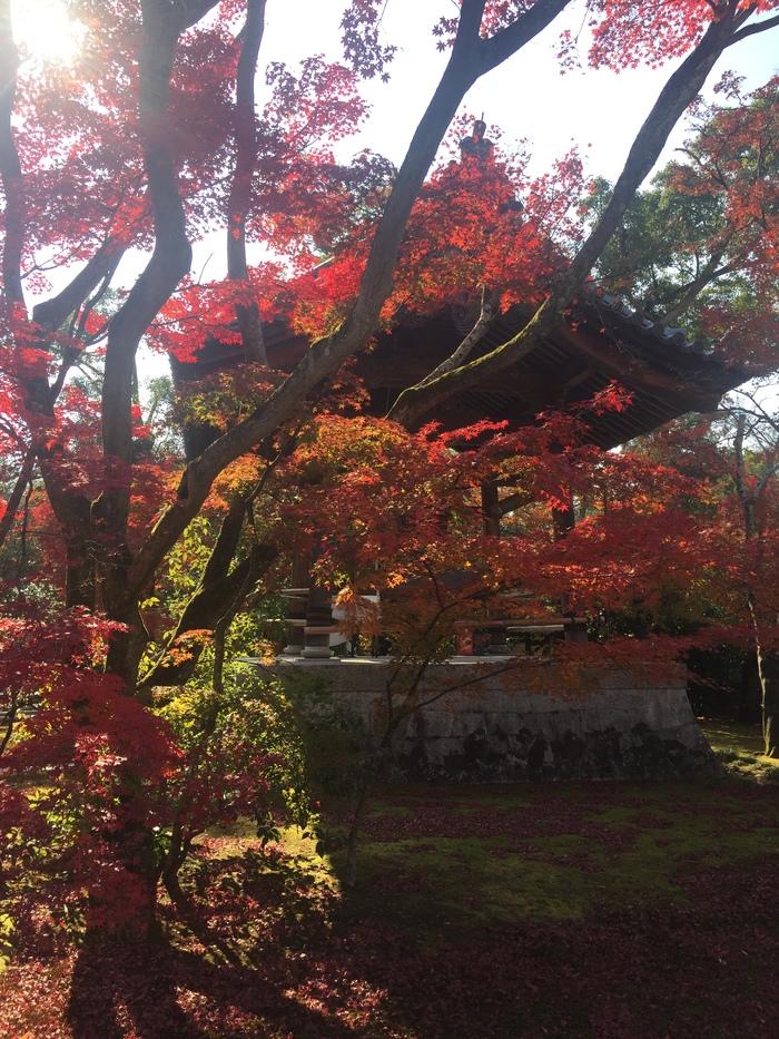 Момидзигари Момидзи, Япония, Киото, Длиннопост