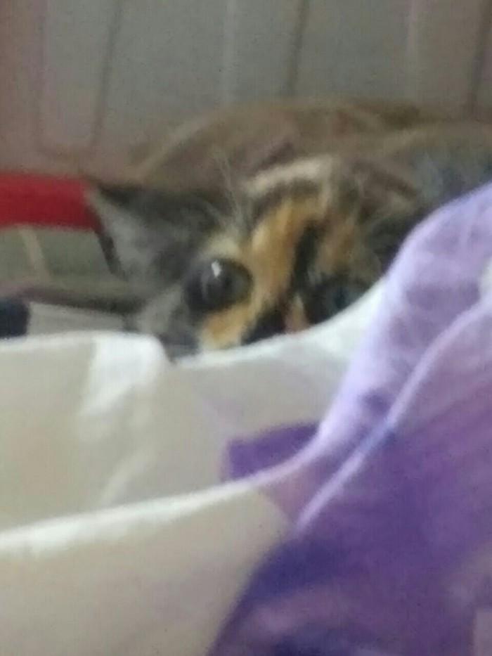 Я за тобой наблюдаю Кот, Страшилка, Котомафия, Глаза, Длиннопост