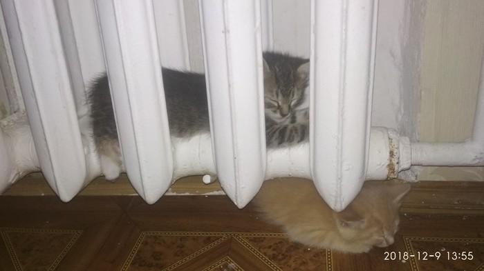 Каждый греется как может Кот, Котята, Тепло, Батарея