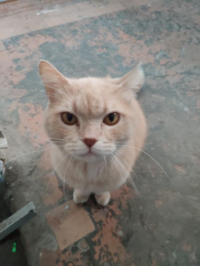 Найден кот. Тюмень. Без рейтинга, Кот, Найден кот, Тюмень, Длиннопост