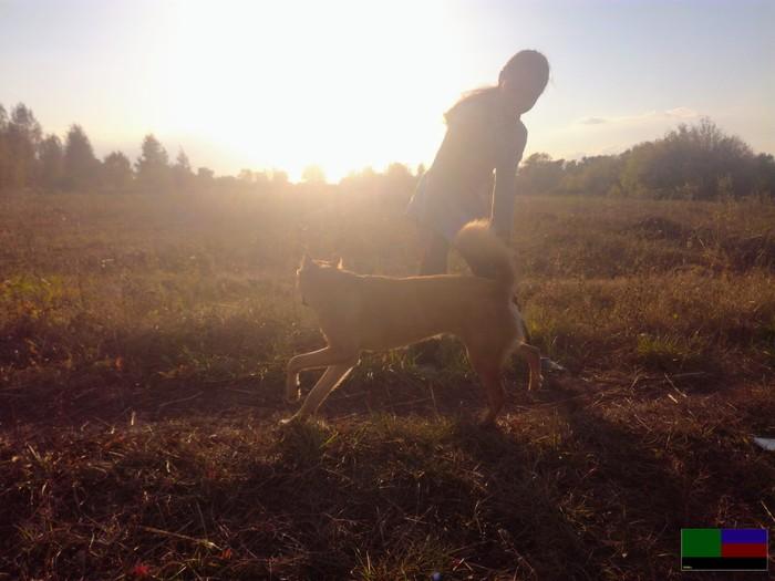 Немного ранней осени вам в ленту. Длиннопост, Осень, Природа, Цветы, Собака, Фотография