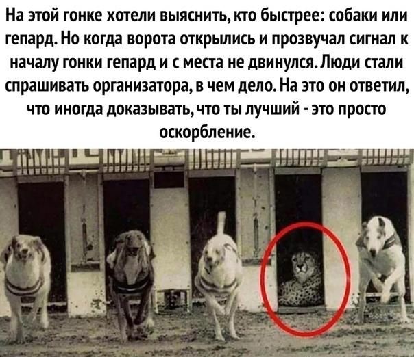 Мудрый гепард