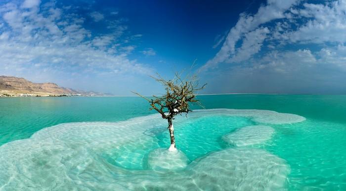 Одинокое дерево в мертвом море.