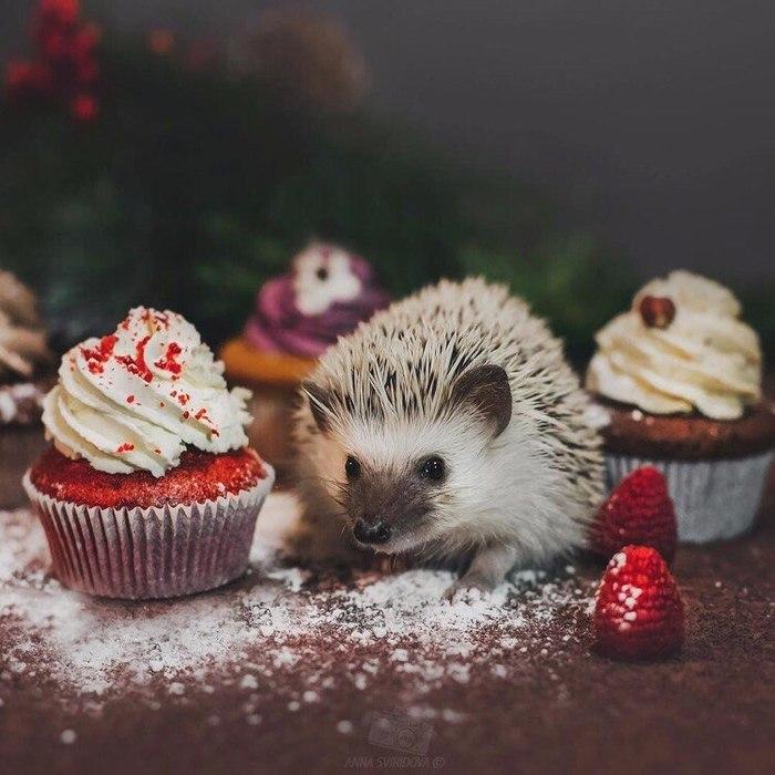 Ежик в новый год картинки
