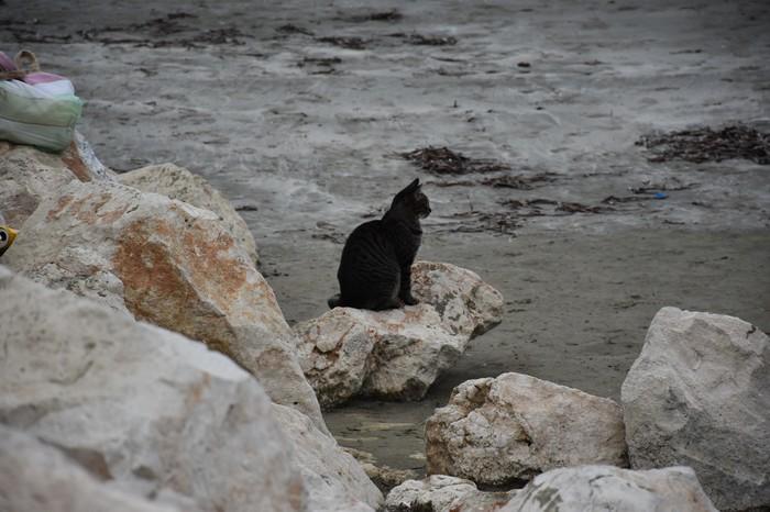 Кошаки у моря Кот, Котомафия, Кипр, Фотоохота, Длиннопост
