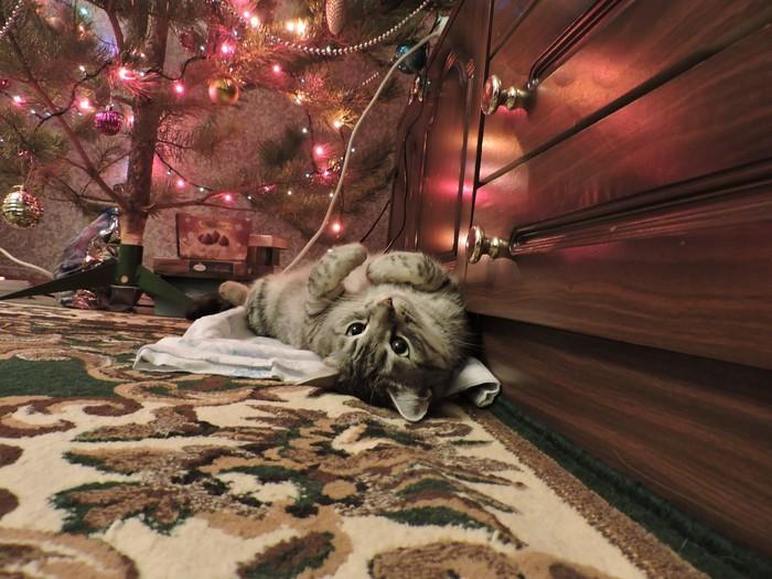 Совсем скоро будет ёлка, сказала жена коту... Котомафия, Кот, Новогодняя елка