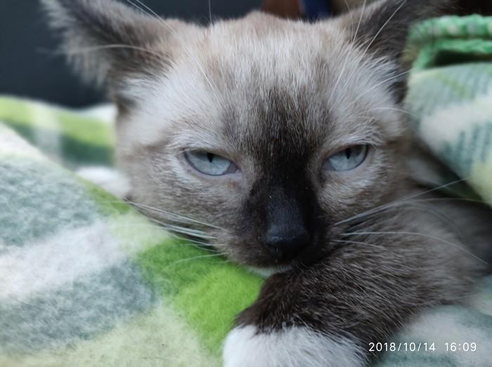 Кот Кот, Котята, Передержка