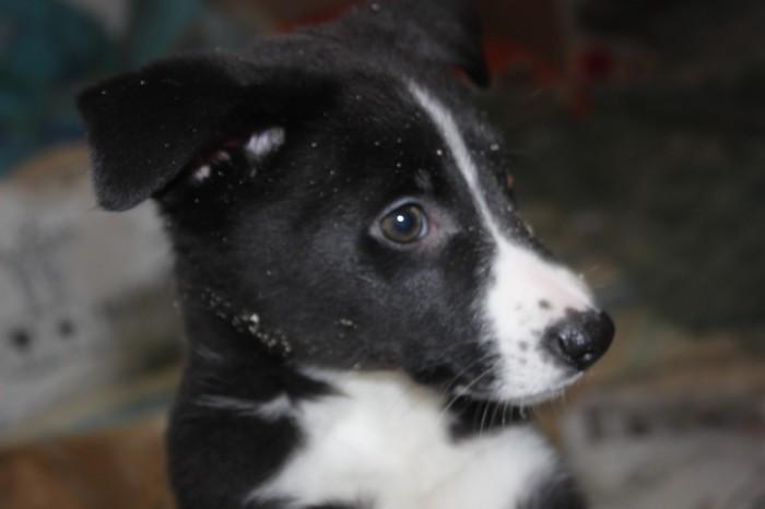 Помощь животным. Руками Приют для животных, Собаки и люди, Щенки, Длиннопост