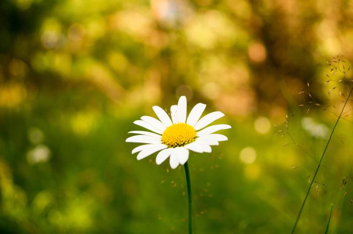 Цветы. Лето, Цветы, Длиннопост, Фотография