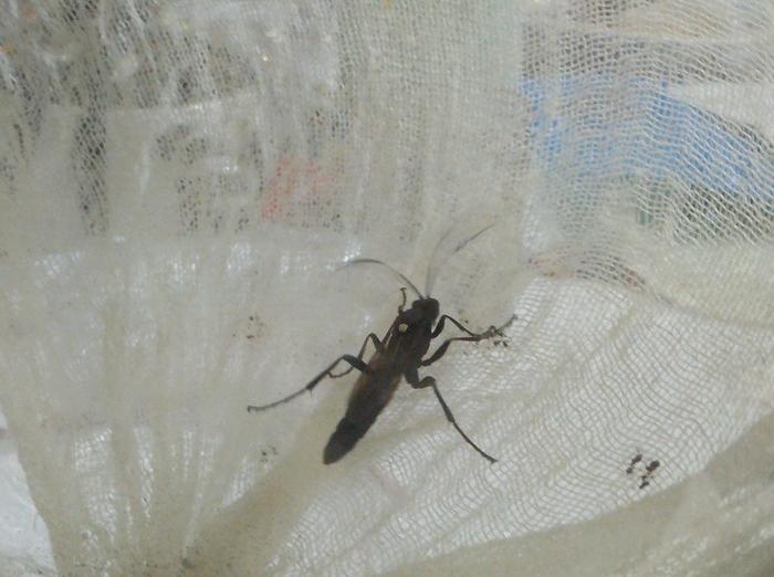 Зерги атакуют. Определение насекомого Без рейтинга, Насекомые, Определение, Лига биологов, Длиннопост