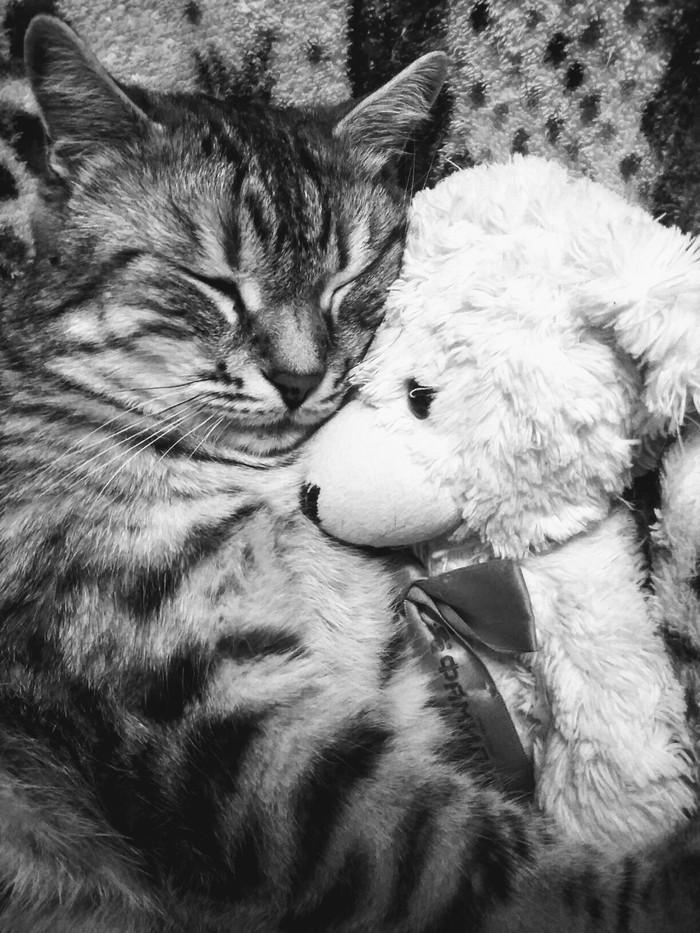 Спят усталые игрушки и котяра тоже спит)) Котомафия, Кот, Сон
