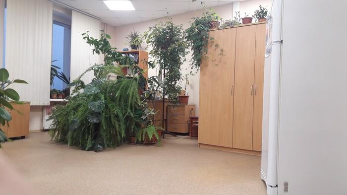 Когда переборщила с удобрениями.. Цветы, Перебор, Госслужба, Растения, Рабочее место