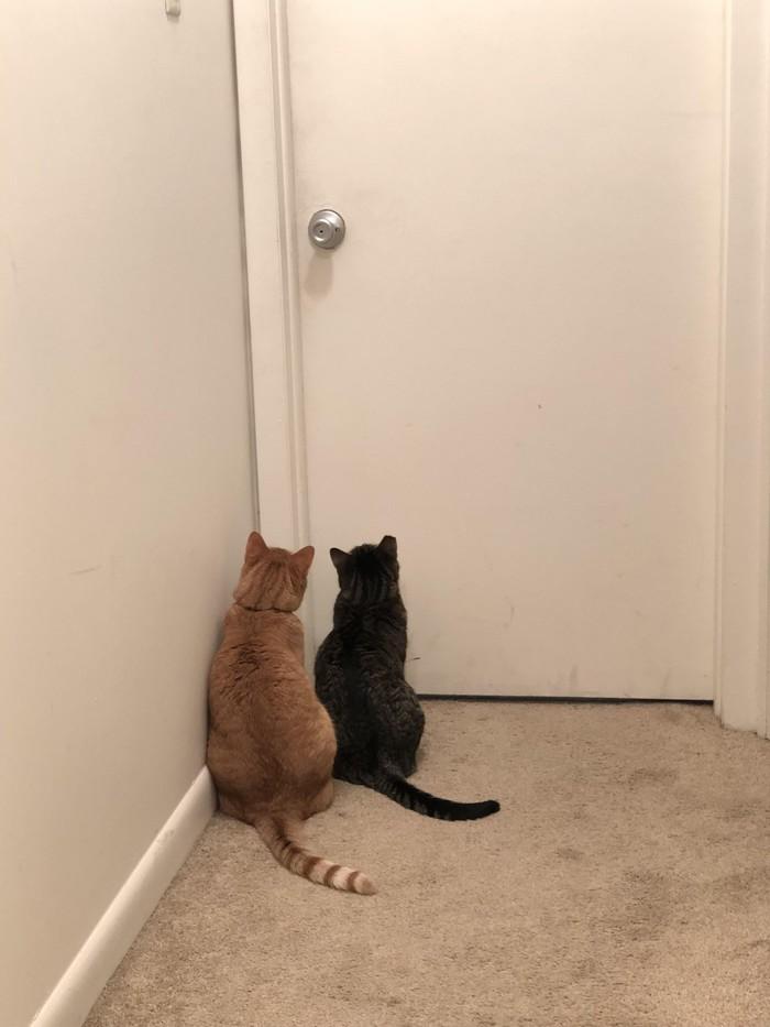 Моя девушка прислала мне это фото когда я был в туалете