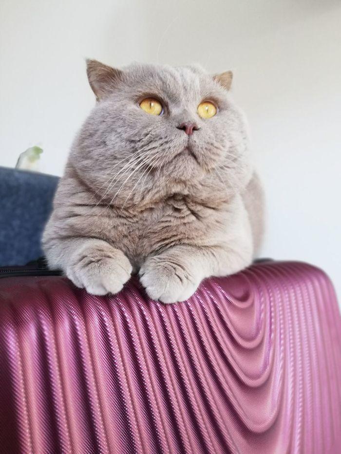 Дождался Кот, Котомафия, Переезд