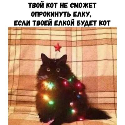 Жаль вчера не увидел этого :) ёлку поставил Кот, Эдди Мерфи, Новый Год, Новогодняя елка, Мудрые мысли