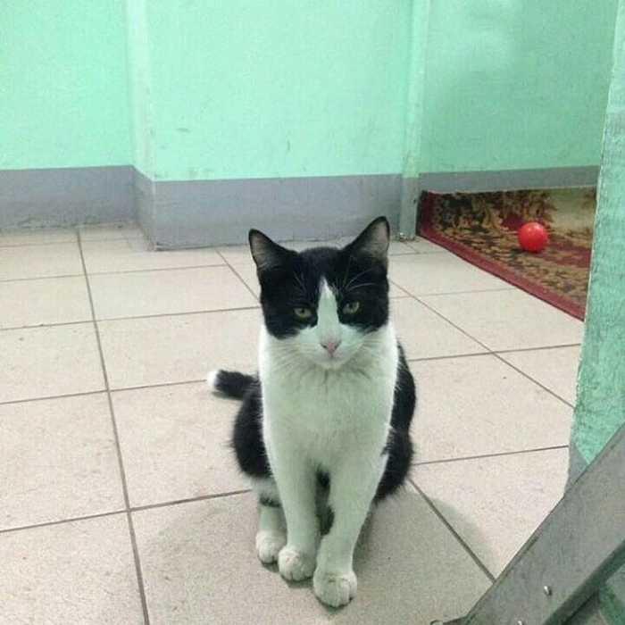 Кота выкинули на улицу :( Кот, Москва, Выхино, Длиннопост, Без рейтинга