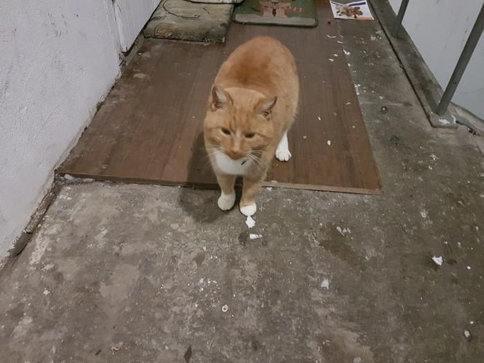 Когда то он был домашним Кот, Котомафия, Помощь, Помощь животным, Пущино, Москва, Без рейтинга