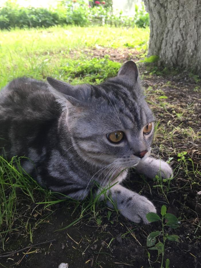 Выпустили в первый раз кота на улицу Кот, Симба, Длиннопост