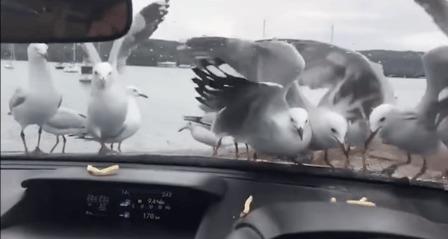 Зря он так с чайками, ой зря.