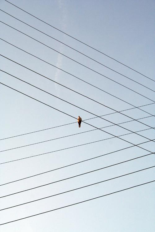Случайная гармония Гармония, Случайность, Высоковольтные провода, Птицы, Фотография