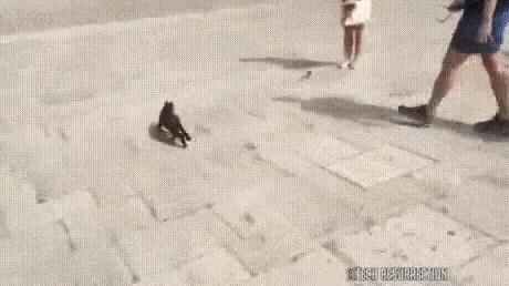 Лови крысу