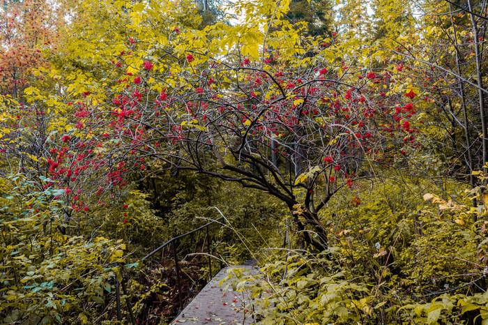 Время года Время года, Лето, Осень, Зима, Пейзаж, Фотография