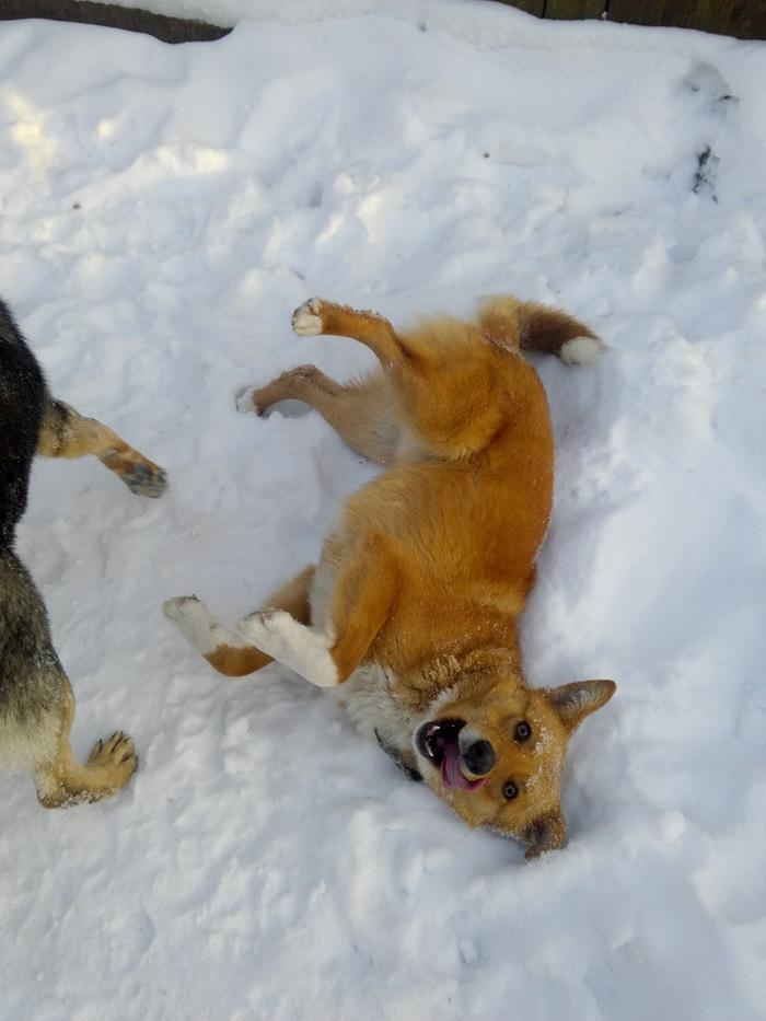 Вот оно, счастье!В гости к нашему собакену пришел поиграть сосед) Собака, Хороший денек, Длиннопост