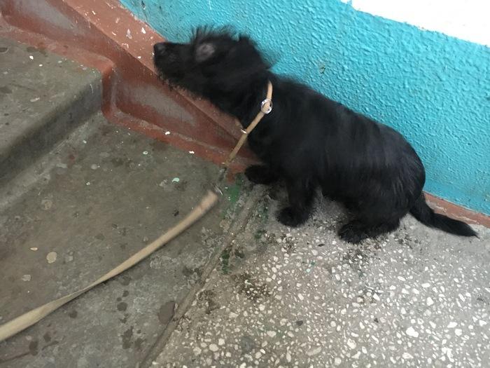 Найден песик Новосибирск Собака, Ищу хозяина, Длиннопост, Новосибирск, В добрые руки, Найдена собака, Потеряшка, Без рейтинга