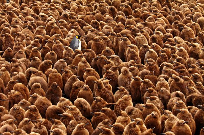 В чужом районе Экосфера, Пингвины, ЮАР, Птенец, Фотография, Детский сад