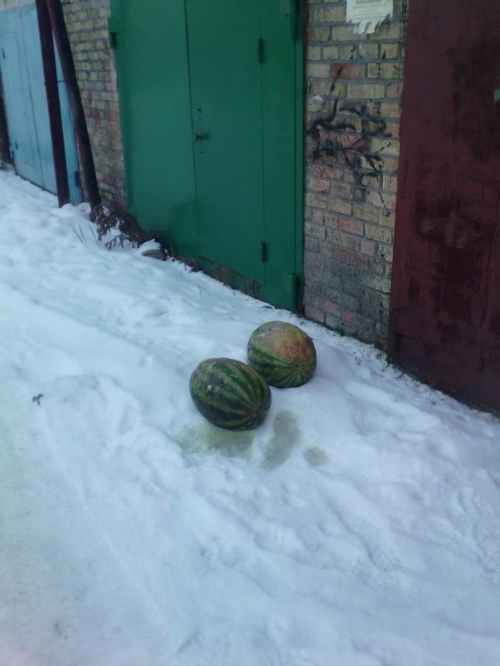 """Я-я-яблоки на снегу..."" Север, Гаражируем"