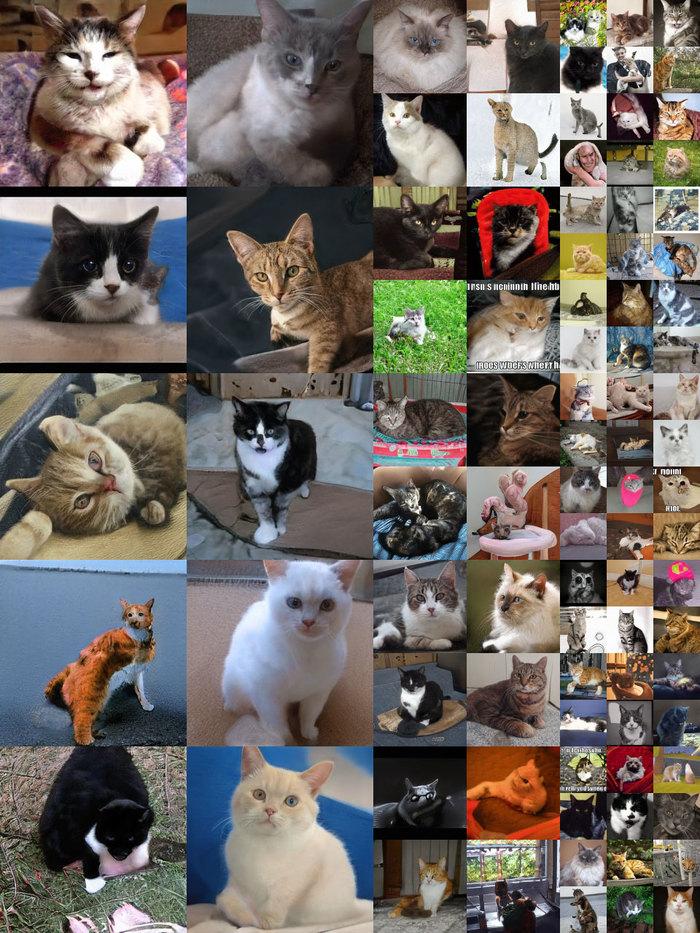 Неизвестные лица Nvidia, Нейронные сети, Виртуальная реальность, Лицо, Кот, Кибернетика, Компьютерная графика, Длиннопост