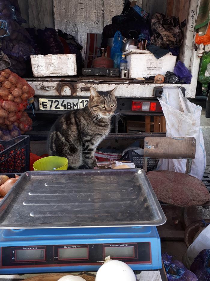 Продавец Кот, Котомафия