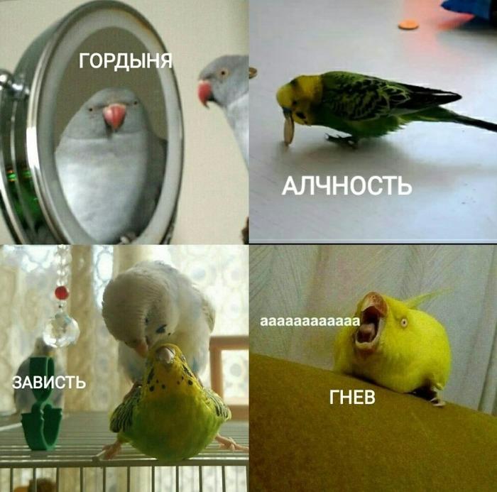 Каков твой грех? Попугай, Грех