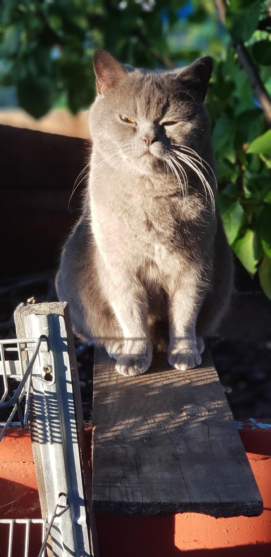 Кот Кот, Фотография, Дача, Шланг, Длиннопост