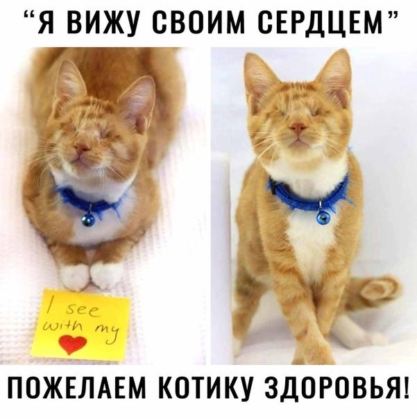 Любите животных Кот, Любовь