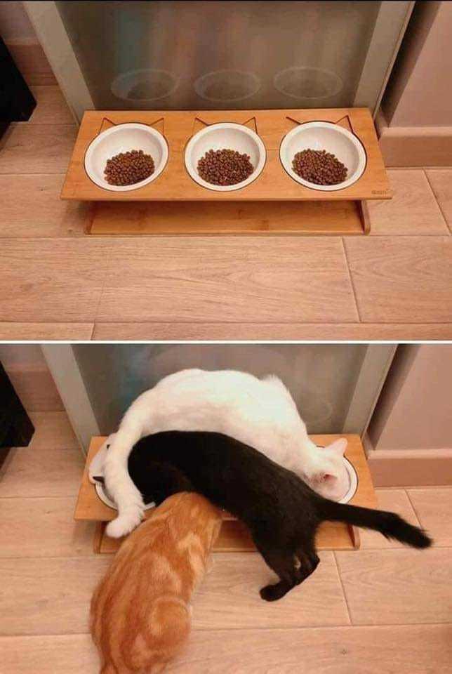 Cats logic