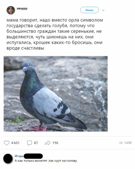 Государство и голуби