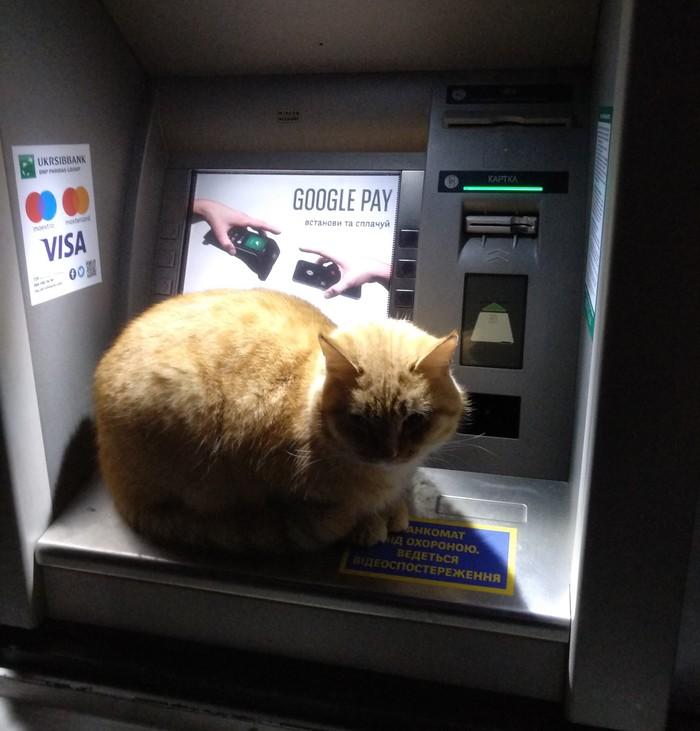 Рыжий Банкомат, Кот, Рыжий, Холодно