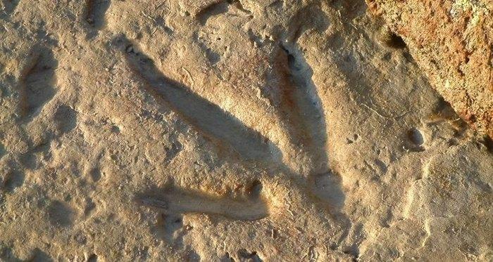 Найдены новые следы динозавров Палеонтология, Находка, Динозавры, Следы, Длиннопост