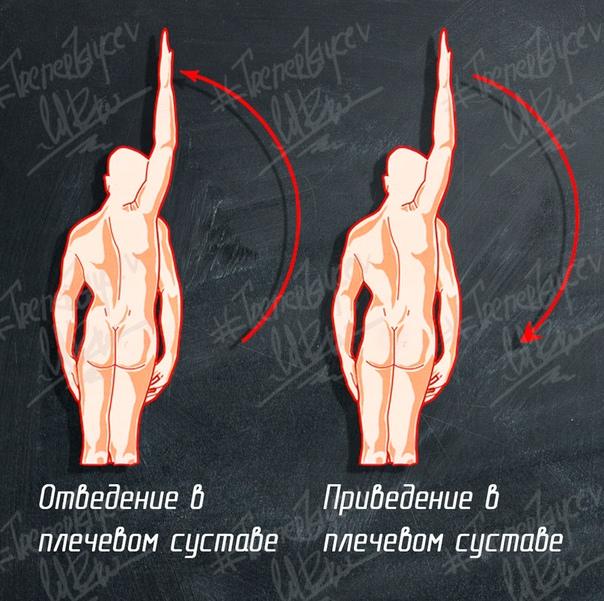 Анатомия мышц плечевого пояса. Точки крепления. Силовые упражнения. Тренировки дельт, Анатомия мышц плечевого пояса, Плечи, Анатомия, Качалка, Тренировка, Спорт, Мышцы, Длиннопост